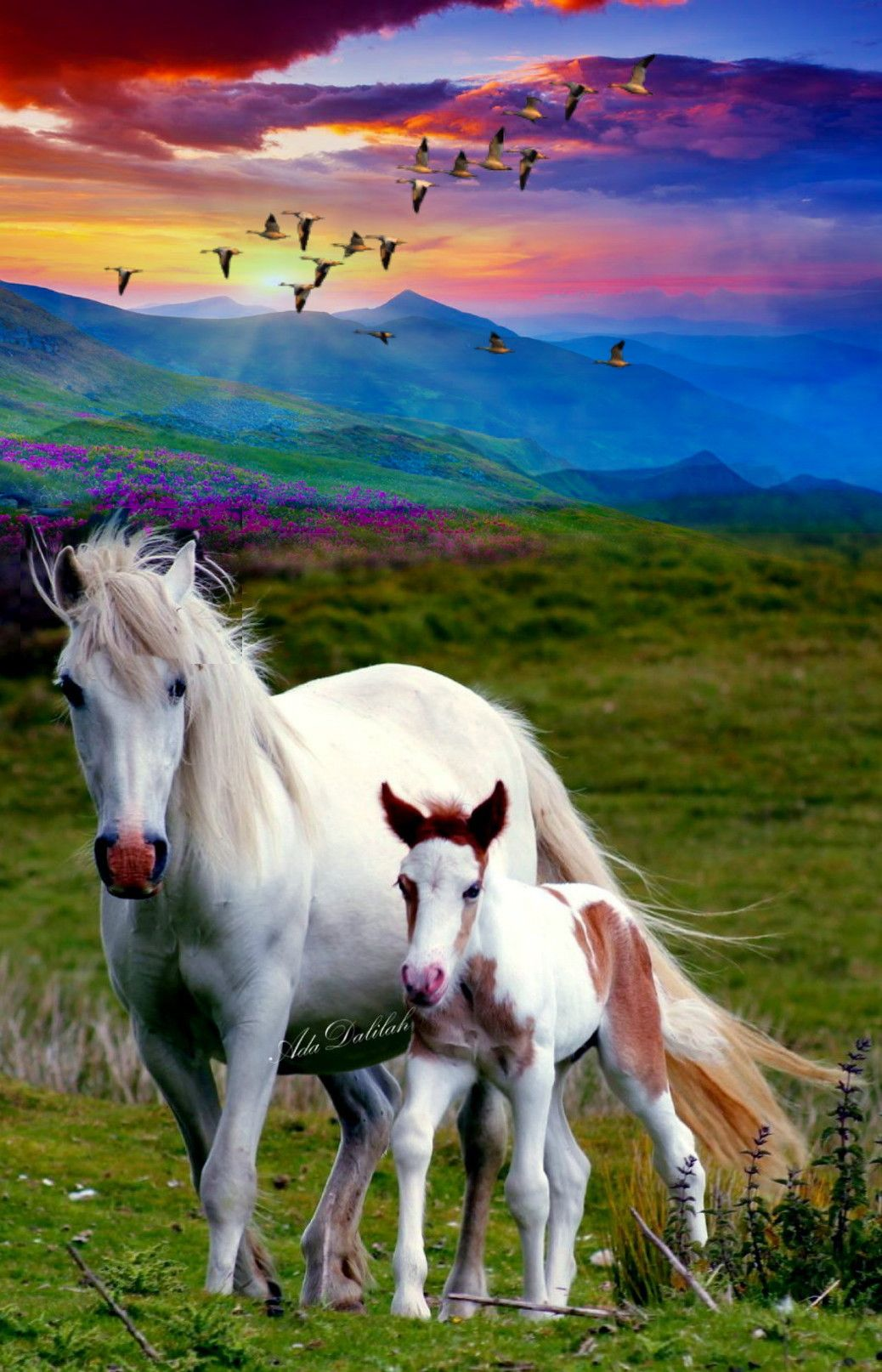 Pin By Ada Dalilah On Horse Art Creative Montage Animals Beautiful Pretty Horses Animals Wild