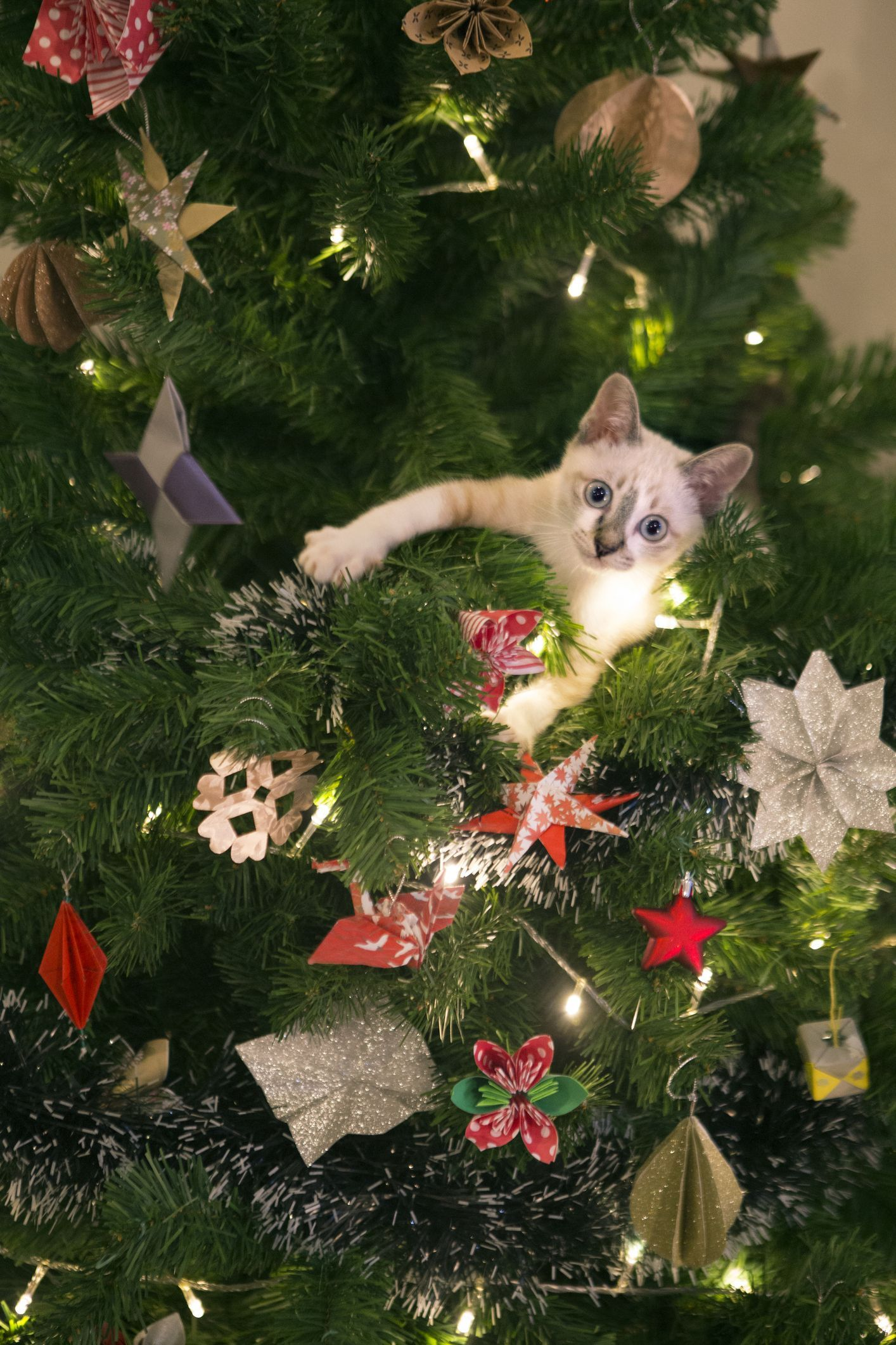 Owners Share Hilarious Pictures Of Their Cats Half Way Up Their Christmas Trees Cat Christmas Tree Christmas Tree Ornaments Christmas Tree Pictures