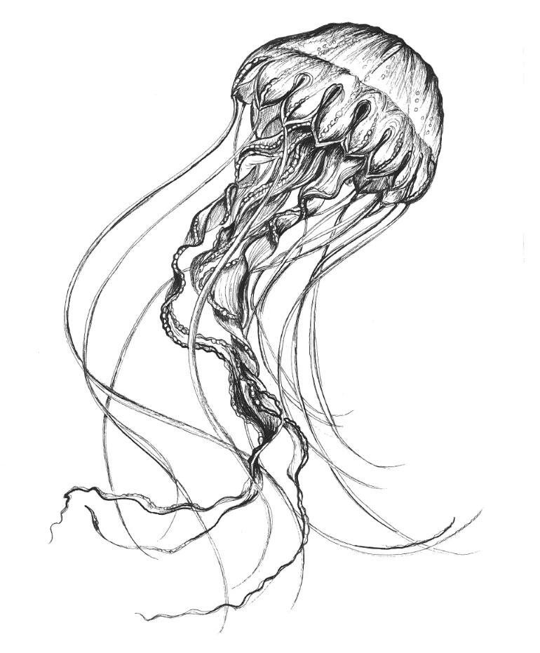 Jellyfish Drawing Sketch