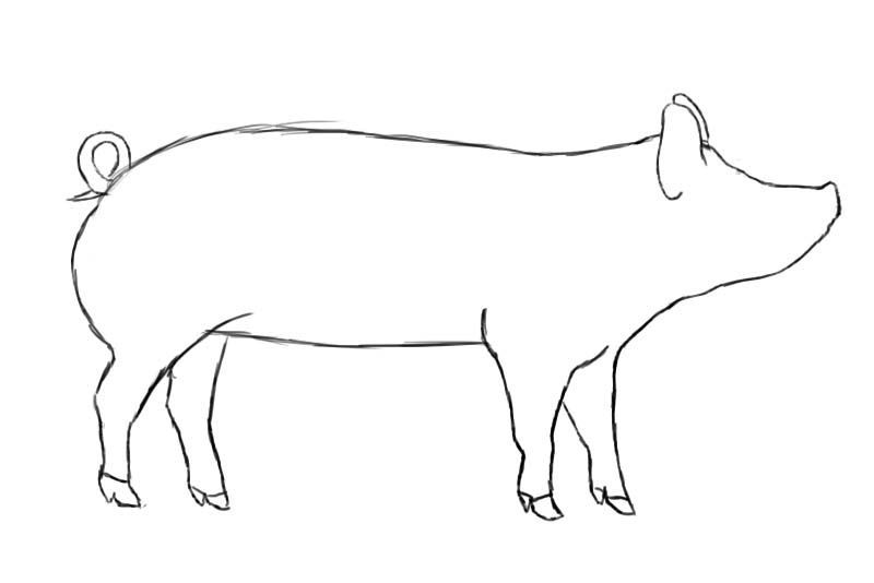 How to draw a pig draw central