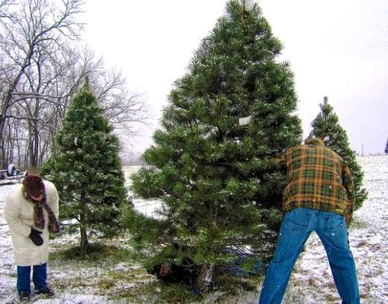 5 Eco Friendly Ways To Dispose Of Your Old Christmas Tree Greenpeace Uk In 2020 Christmas Tree Old Christmas Hobby Farms