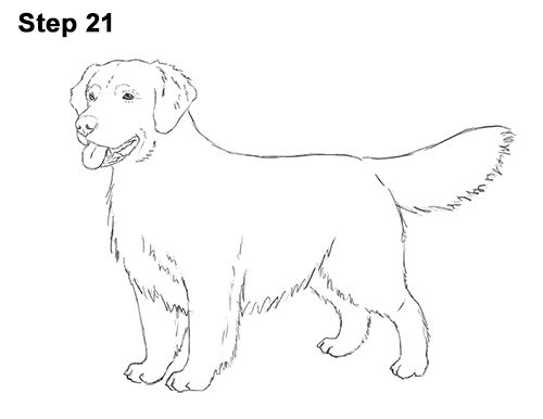 How To Draw A Dog Golden Retriever