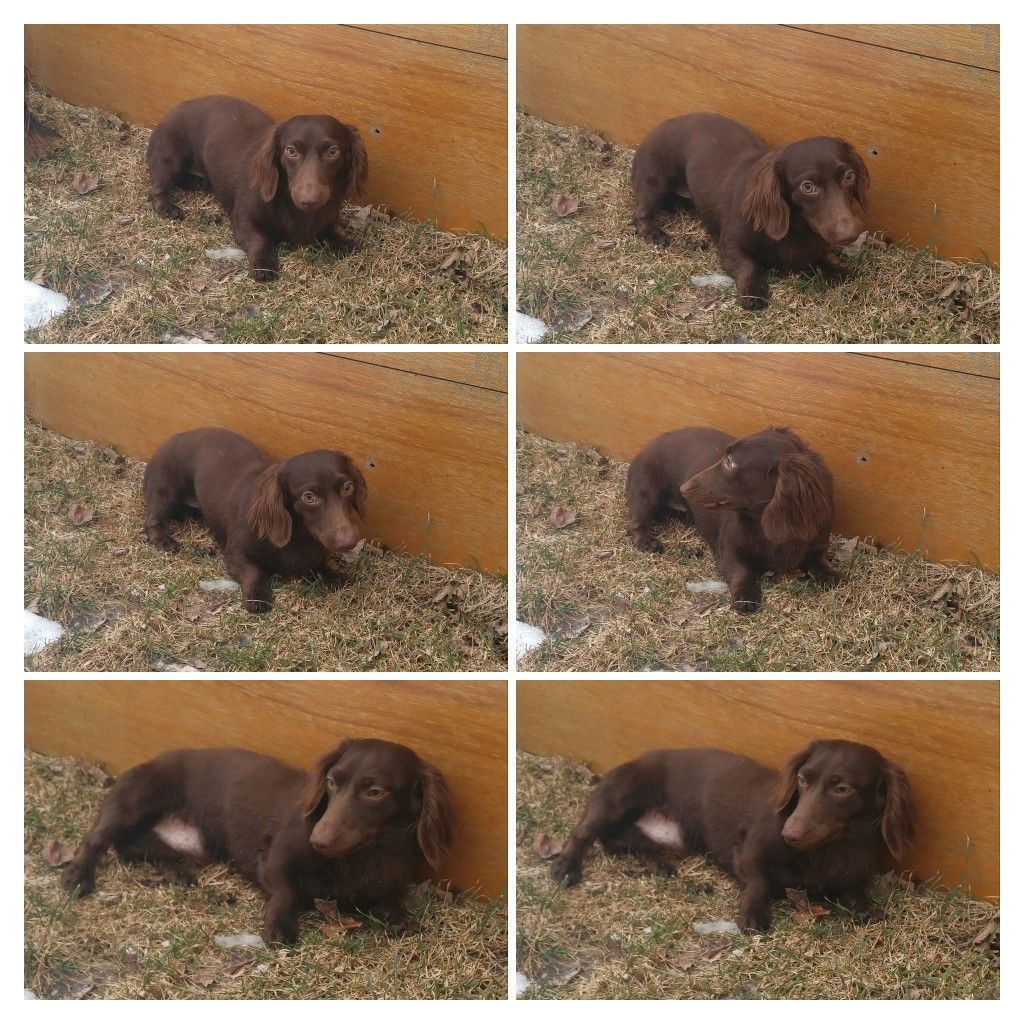 Pin by Chris Wilson Fielding on dachshund stuff (With