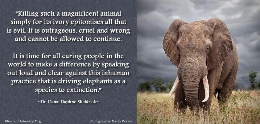 Dr Dame Daphne Sheldrick Save The Elephants