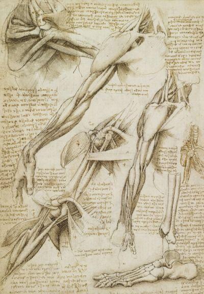 Anatomy sketches by Leonardo da Vinci.   Leonardo Da Vinci ...