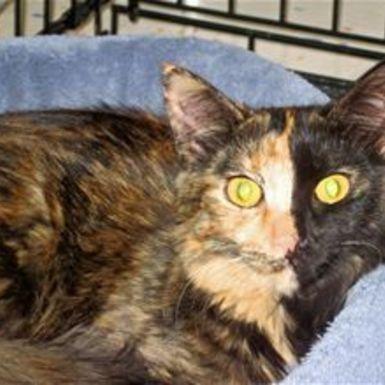 Calico Cat Representative Species