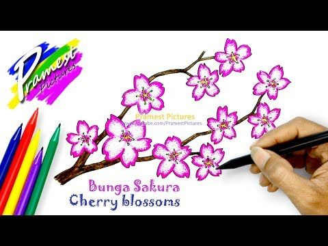 Menakjubkan 28 Sketsa Bunga Sakura Berwarna Sakura Cara Menggambar Dan Mewarnai Gambar Bunga Untuk Koleksi Gambar Bunga Cantik Dan Di 2020 Bunga Bunga Sakura Sketsa