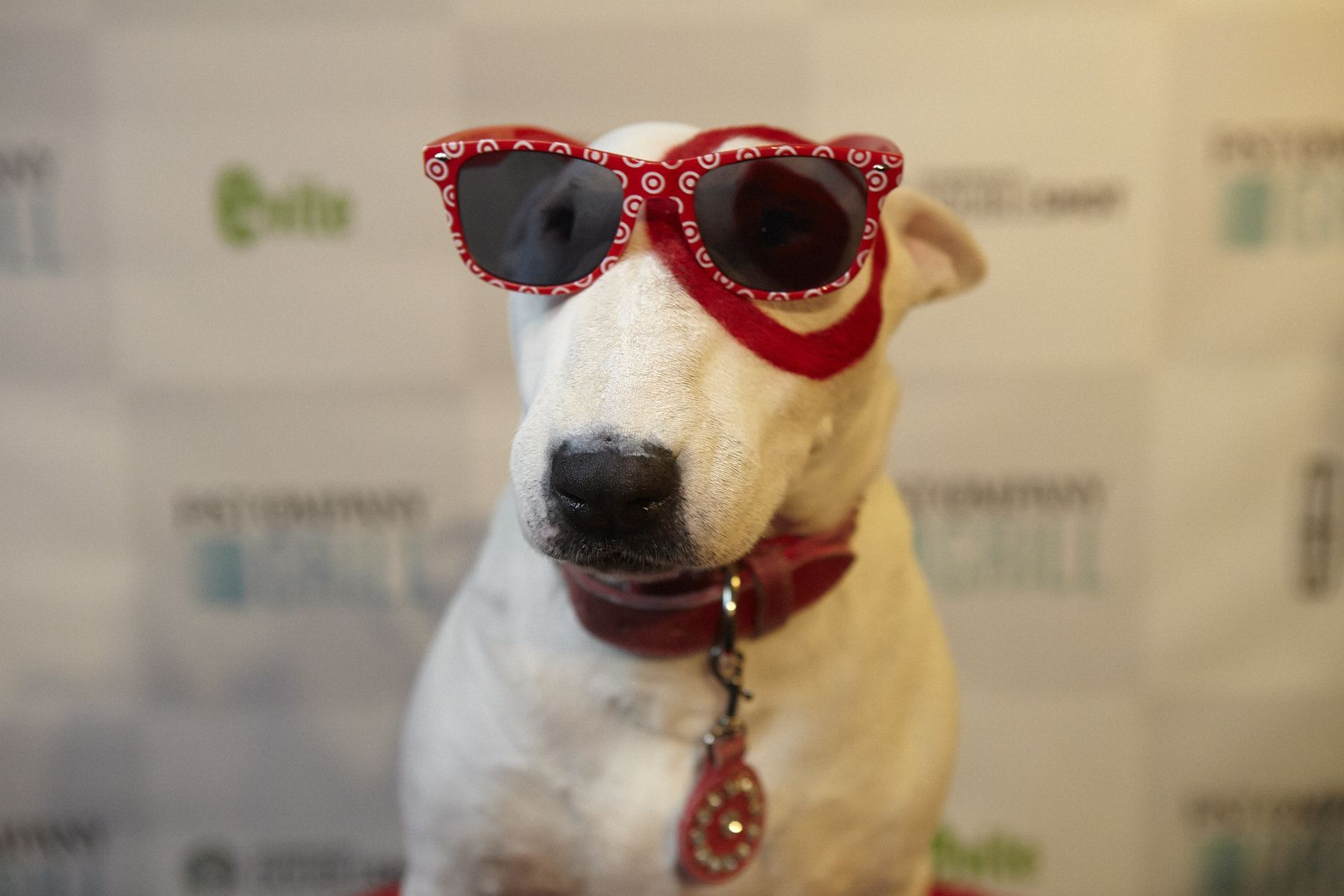 Target Corporate Social Responsibility Careers Press Investors Famous Dogs Dog With A Blog Target