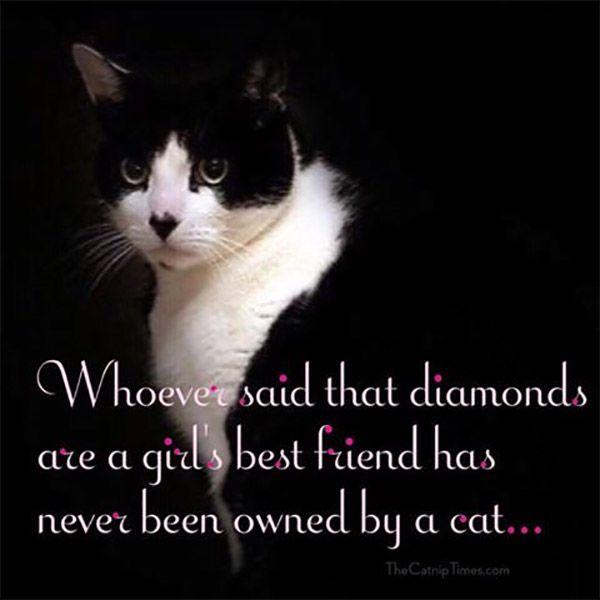 A Girl's Best Friend :: blogitude.com
