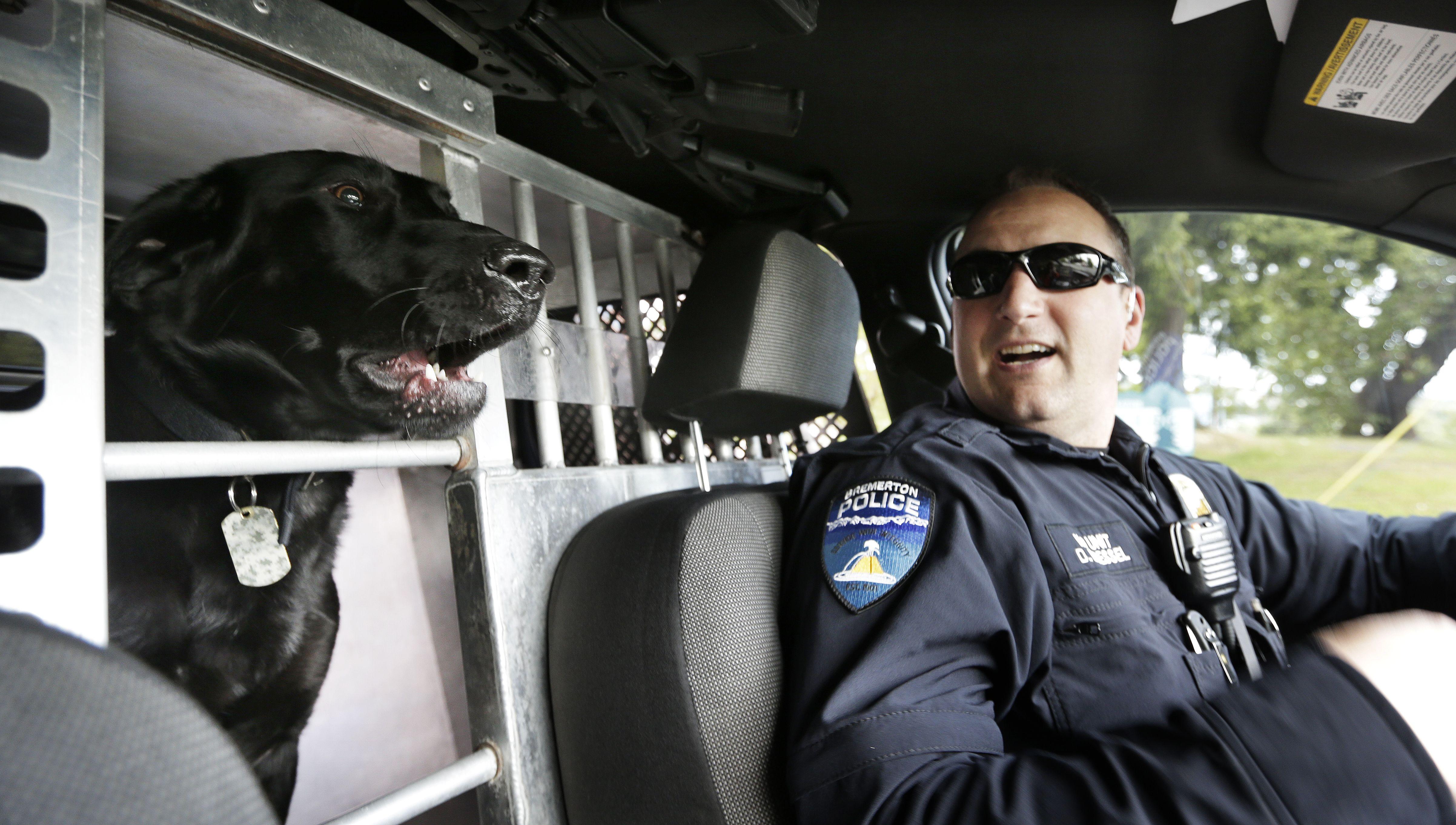 Drug sniffing #policedog