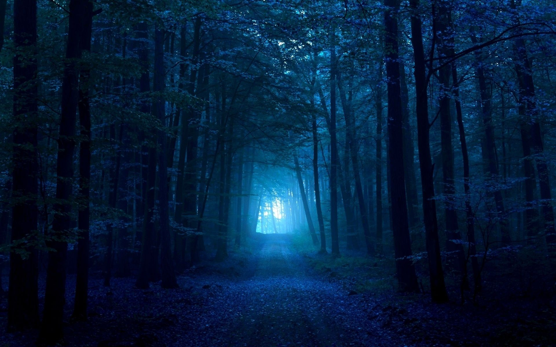 Wood Gloomy Light Pass Path Track Dark Blue Fog Exit Nature Wallpaper Blue Forest Dark Forest Forest Moon