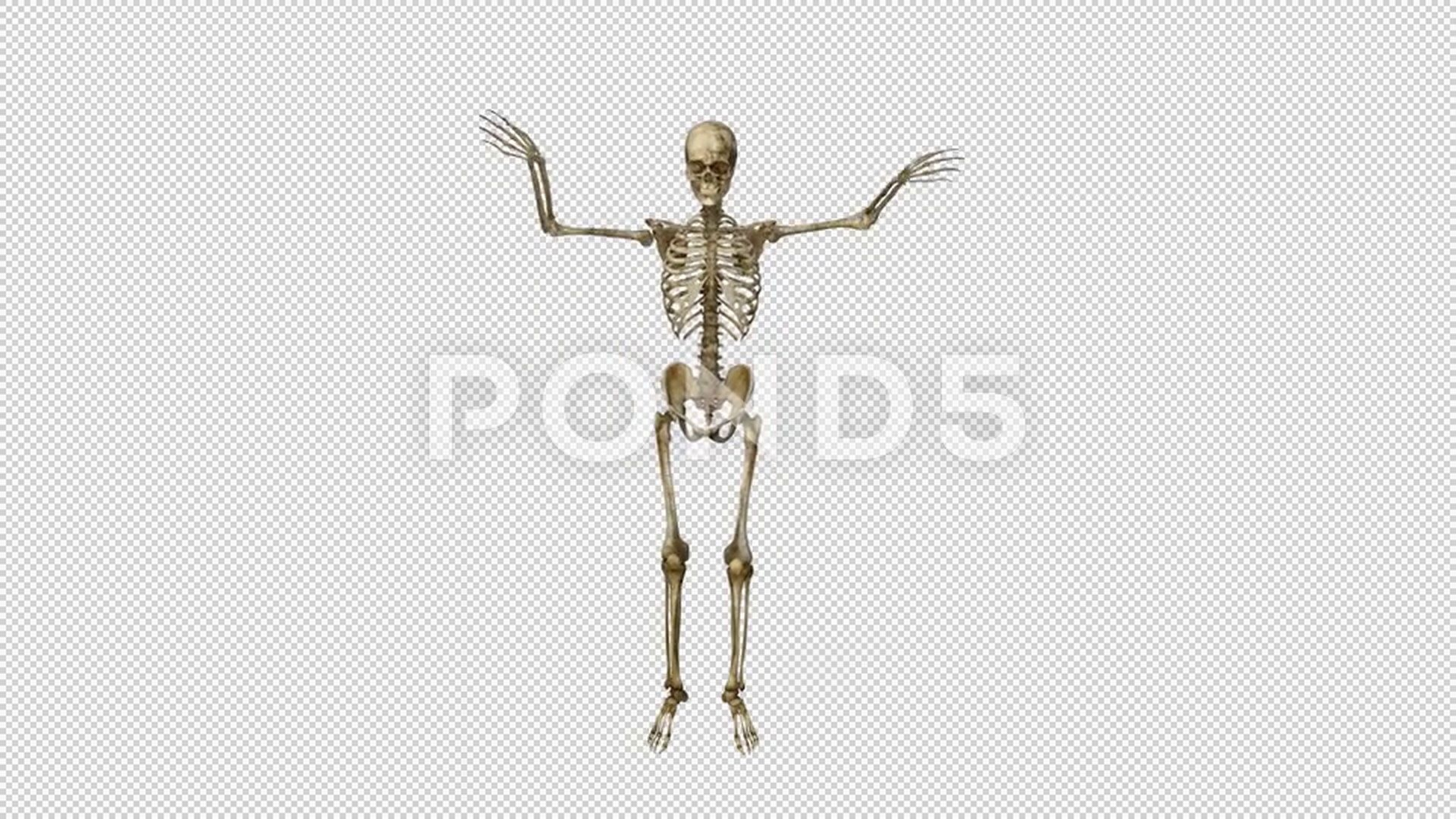 Skeleton Dancing Hip Hop Animation Alpha Channel Isolated Stock