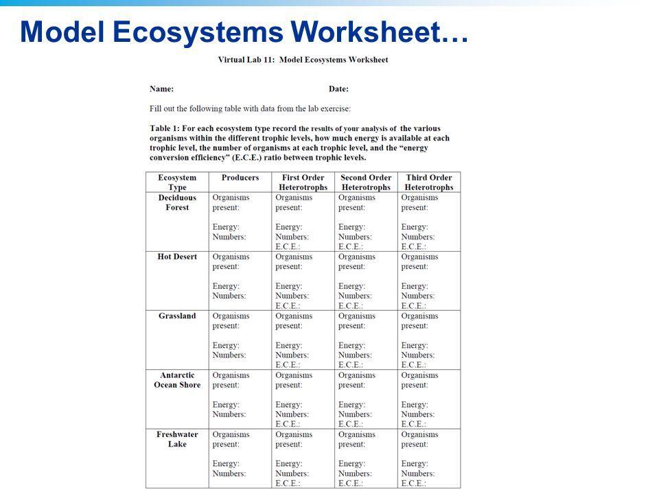 2011 Pearson Education, Inc  Virtual Lab : Modeling