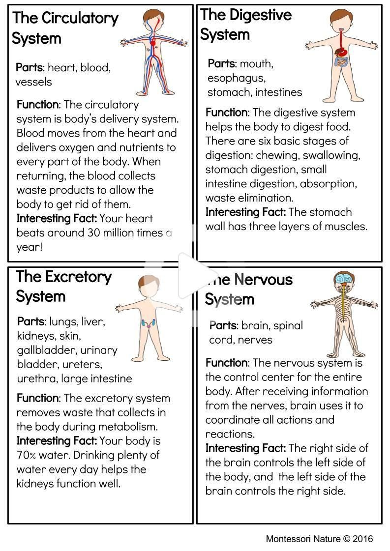 Systems Of The Human Body Montessori Printable in 2020