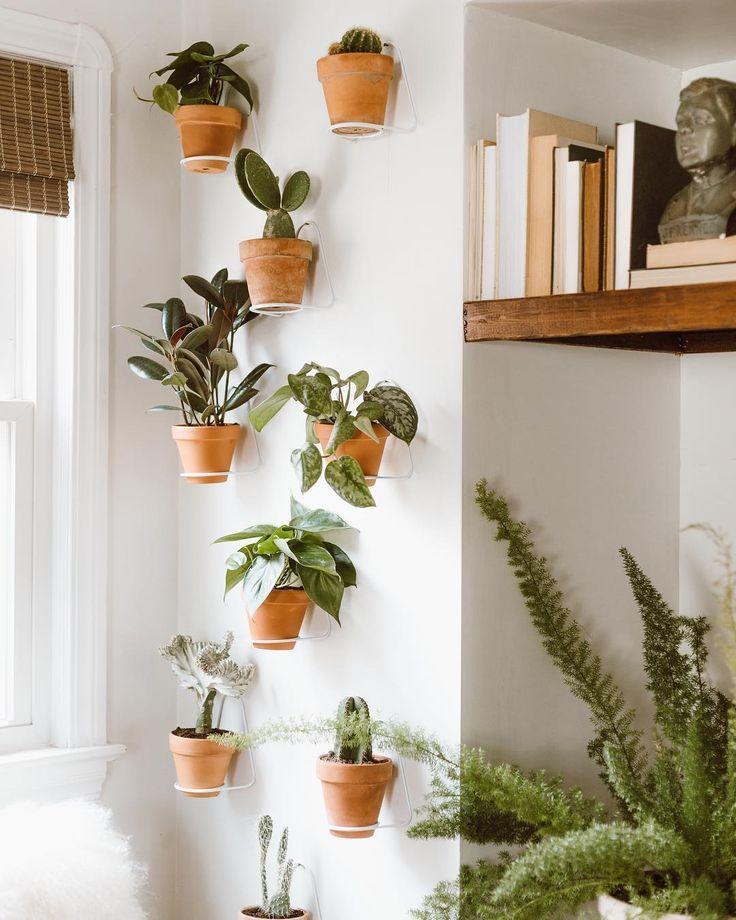 Photo of Pflanzen dekorieren: So setzt ihr euer Grün perfekt in Szene