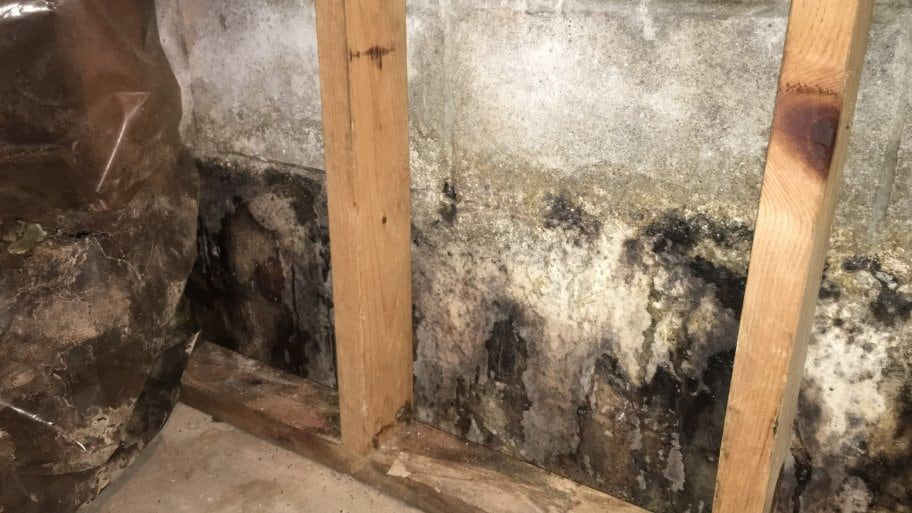 How to Clean Mold Mistakes to Avoid Mold remover, Mold