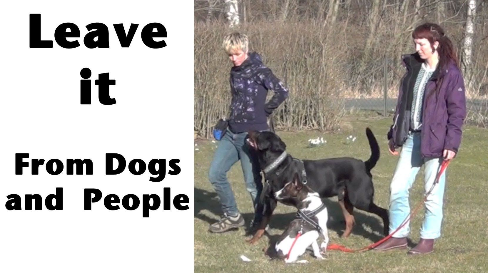 Teaching Leave It Part 3 Leaving People Other Dogs Kikopup