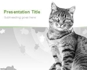 Domestic Cats Powerpoint Template Free Powerpoint