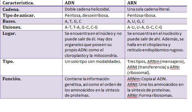 Cuadros Comparativos Entre Arn Y Adn Cuadro Comparativo Adn Y Arn Adn Molecula De Adn Maqueta