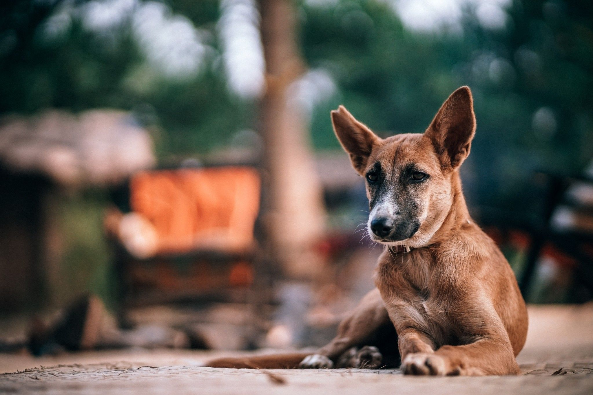 Pin By Kalyan Stanliey On Special Photograpy S In 2019 Dog
