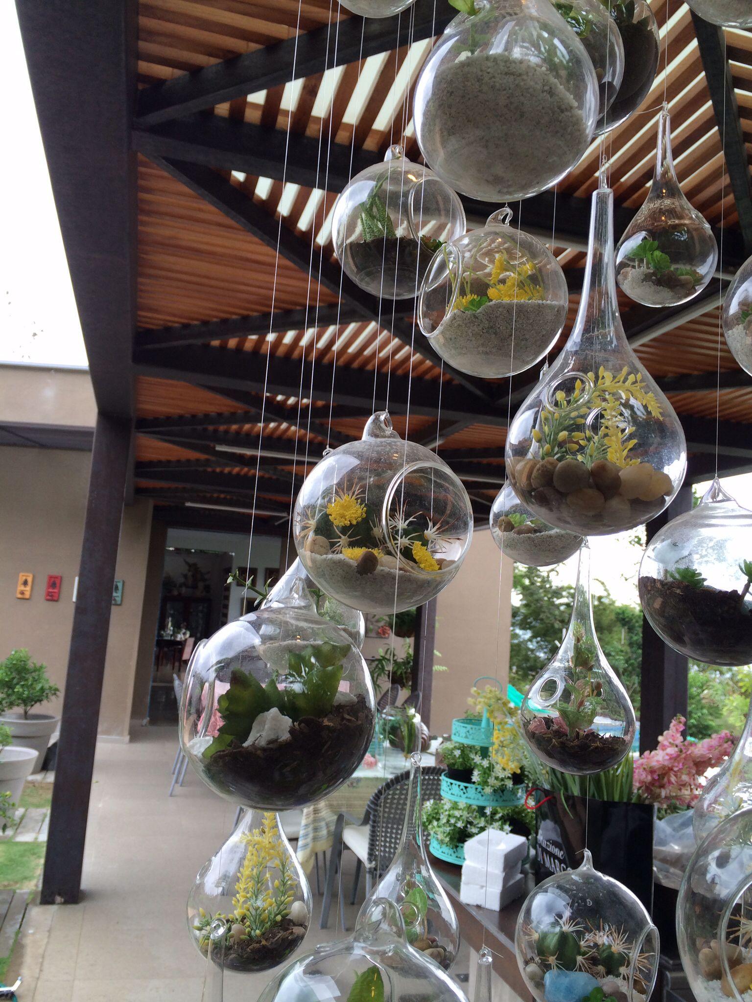 Suculentos plantas