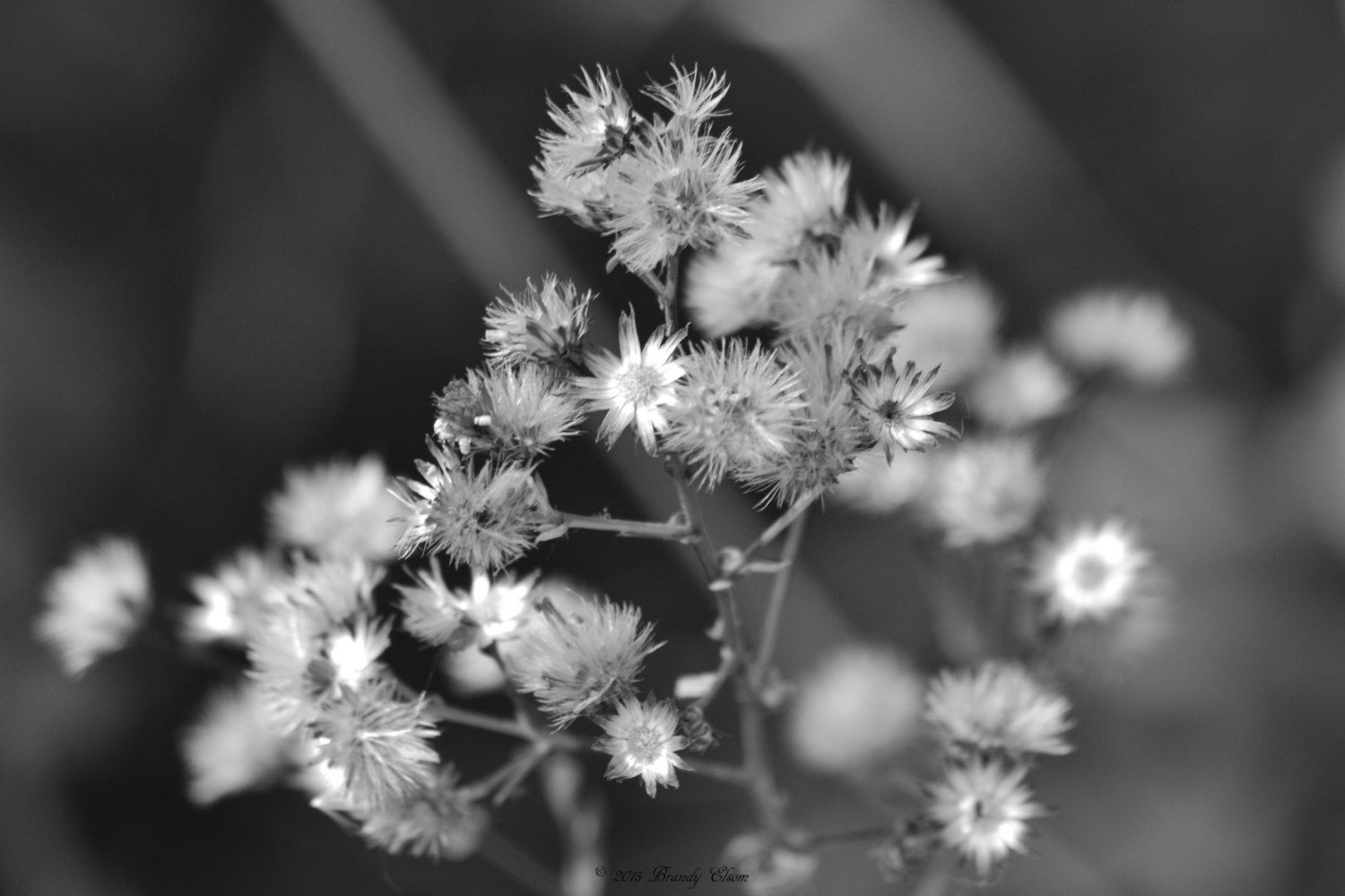 Fall Flowers Black And White Dried Flowers Wall Hanging Home Decor