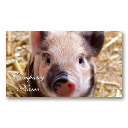 Piglet Business Card $21.45