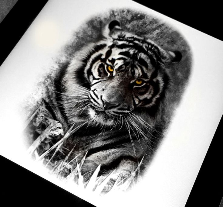 realistic tiger tattoo design done in black and grey by. Black Bedroom Furniture Sets. Home Design Ideas