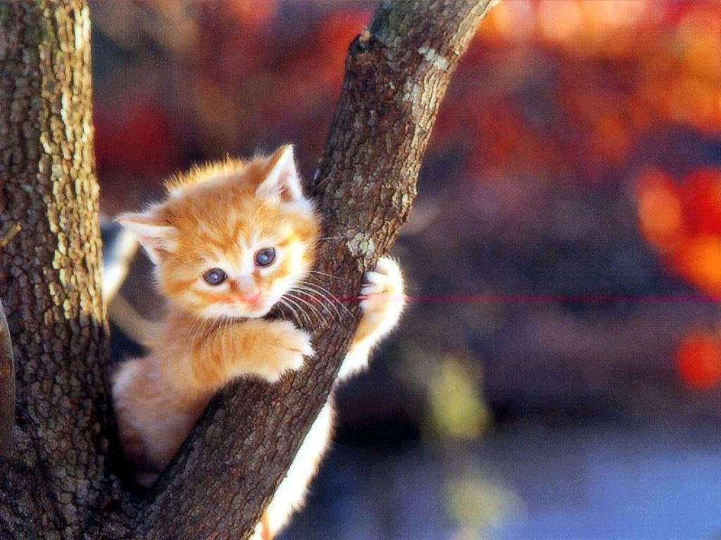 cute and lovely cat wallpapers for desktop | hd wallpapers