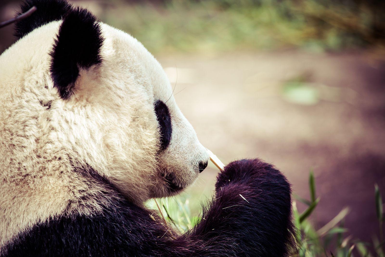iMOB Google's Panda 4.1 Rollout Still in Progress