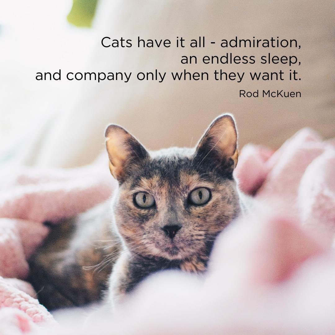 Ah Cat S Really Live The Good Life Don T They Petpals Petsupplies Santacruz Soquel 831 Welovecats Catlove Catlife Instacats C Kedi Resim