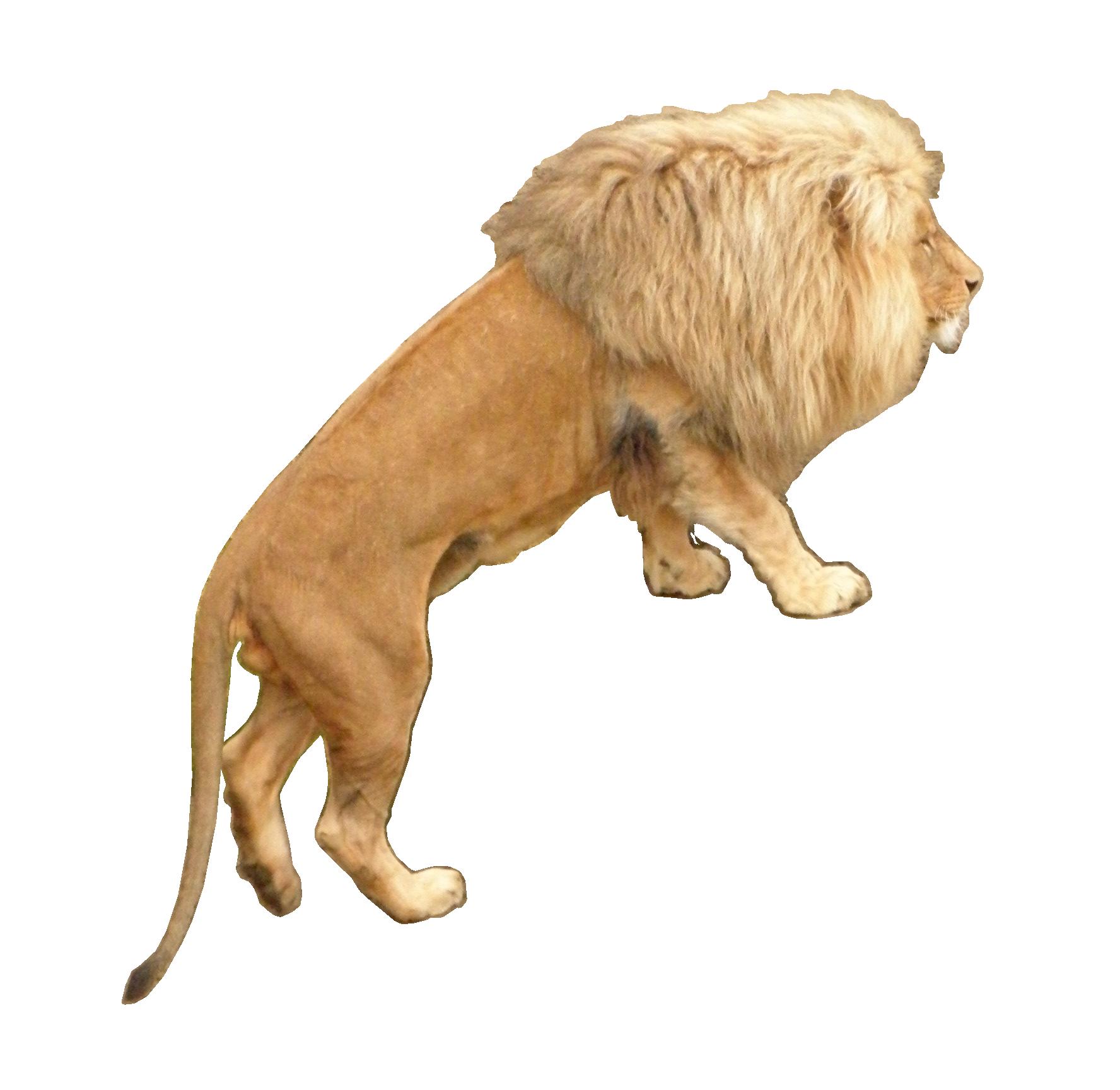 Lion Animal Png Image Animals Lion Lion Sculpture