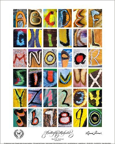 1000+ images about alphabet on Pinterest | Wool, Awesome and For kids