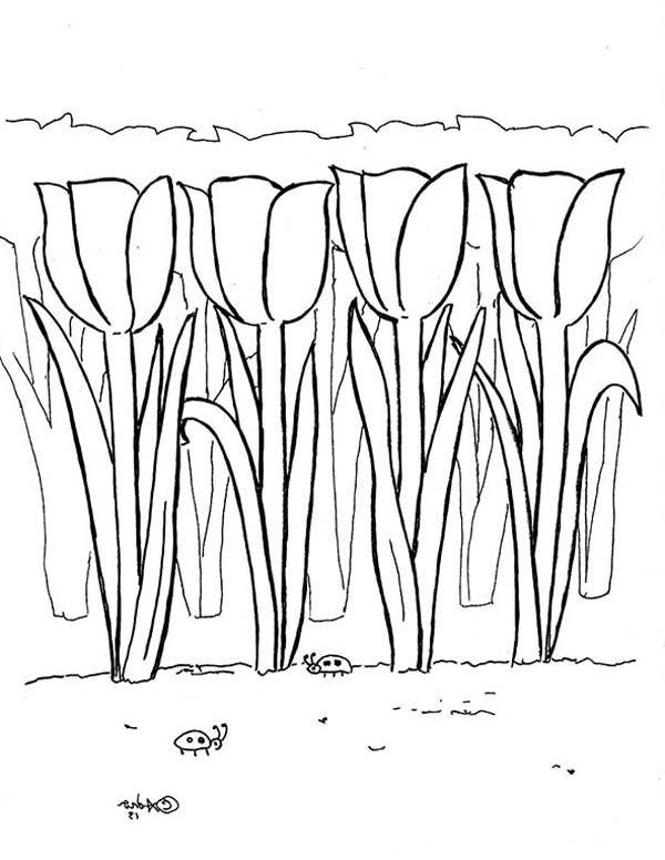 malvorlagen kostenlos tulpen  aiquruguay