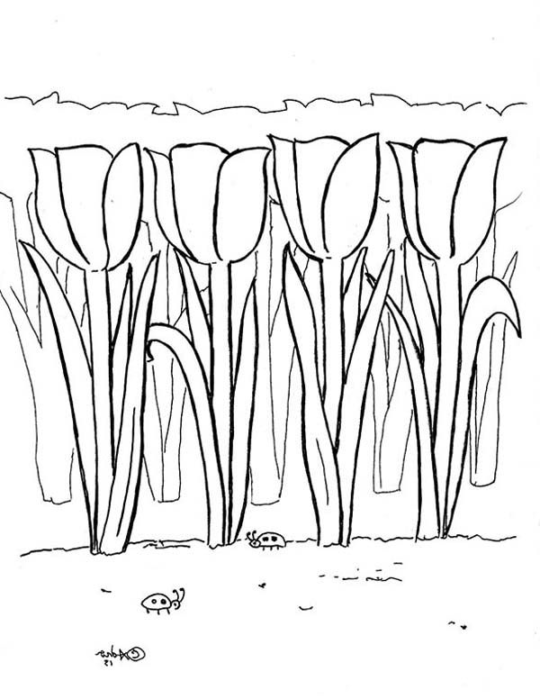 Tulips A Lovely Tulips Field In Amsterdam Coloring Page With