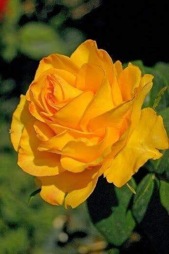 Épinglé par Hunny Adam sur Beatiful and Clourful Flowers ...