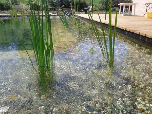 Slide1 piscine naturelle piscine diy piscine - Autoconstruction piscine naturelle ...