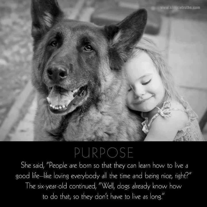Gsd Quote Gsd Pics Dogs Pets Animals