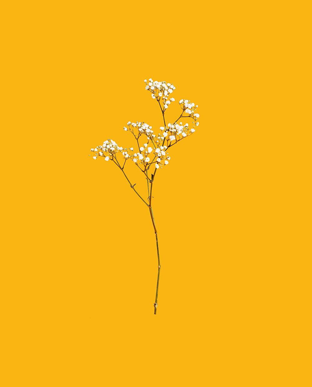 The Better Half Of A Fan Eme Magazine Yellow Aesthetic Yellow Wallpaper Contrast Art