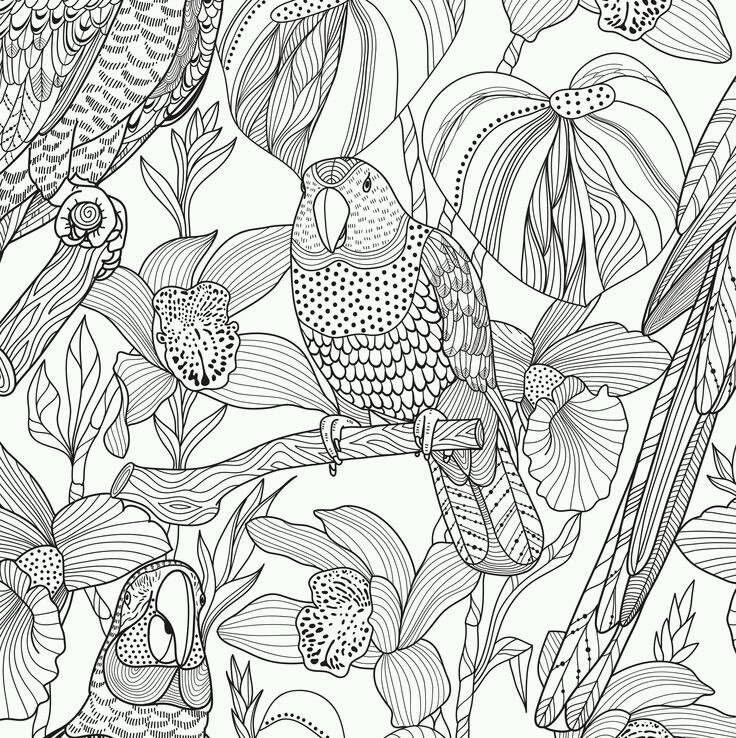 Раскраска антистресс попугаи