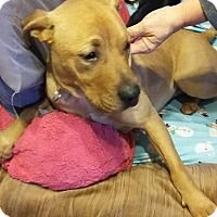 Adopt A Pet Coco Cleveland Oh Pet Adoption Adoption Pets