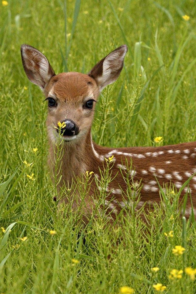 Pin By Bellababy On Animals Cute Animals Nature Animals Animals