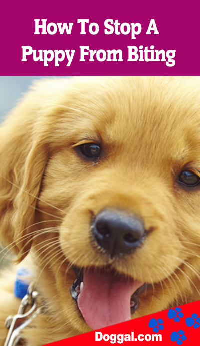 How To Stop A Puppy From Biting Can Be A Tricky Task Puppy Biting
