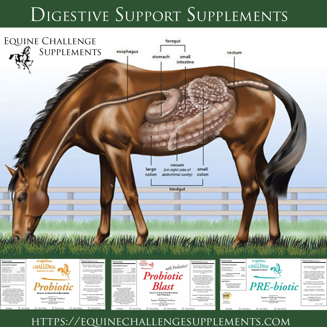 Digestive Support Probiotic Prebiotich Horse Supplements Horse Supplements Horses Digestive Support