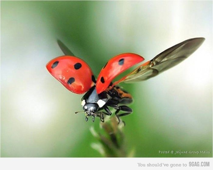 Never Have I Seen Them Flying Insects Ladybug Bugs And Insects
