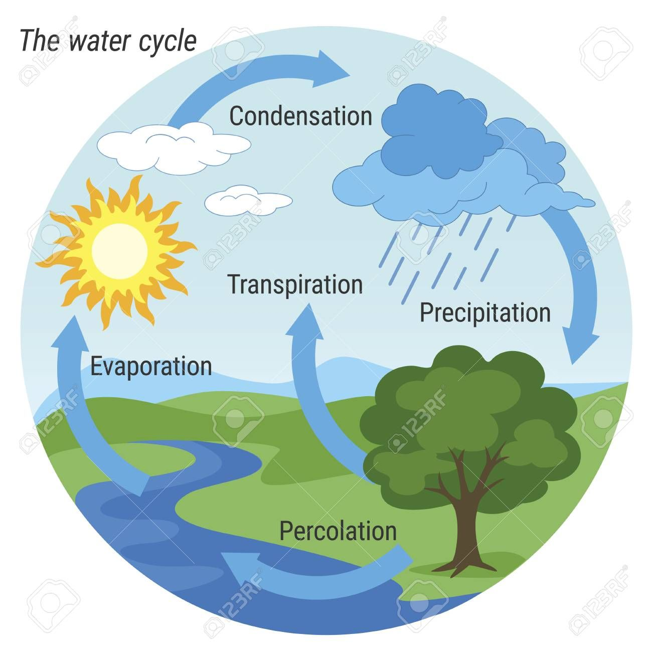 Vector schematic representation of the water cycle in ...