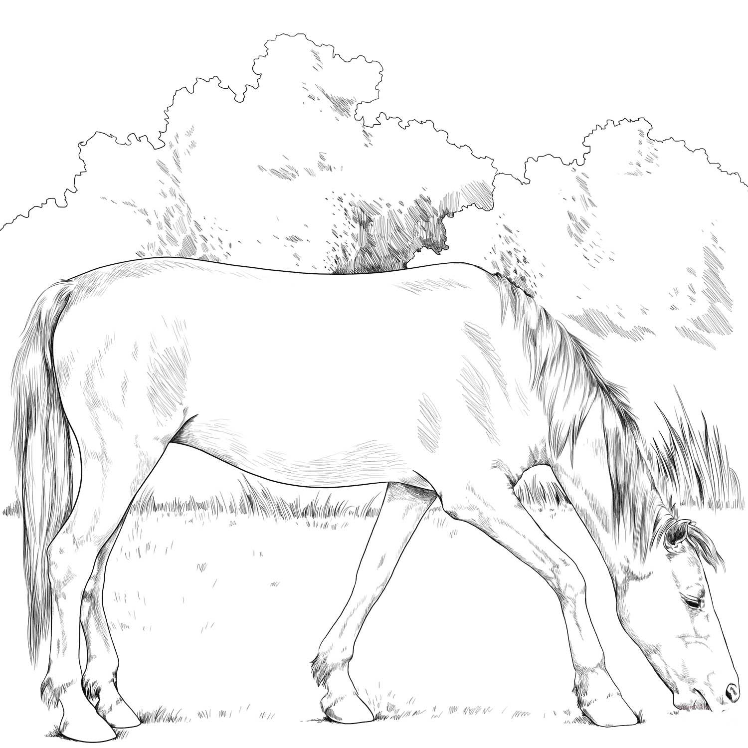 Criollo Horse Coloring Page Animal Coloring Pages Horse Coloring Horse Coloring Books [ 1500 x 1500 Pixel ]