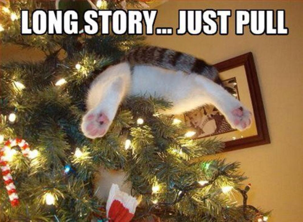 Daarom Hebben wij geen kerstboom