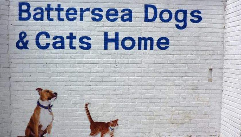 Battersea appeals to public to adopt as rescue animals