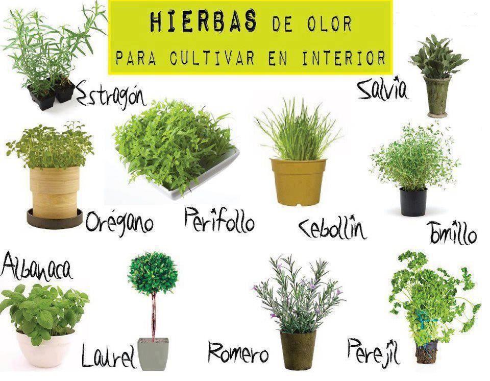Verdea tu casa apartamento con plantas comestibles de buen for Plantas ornamentales de interio